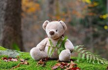 teddy-bear-524251_640