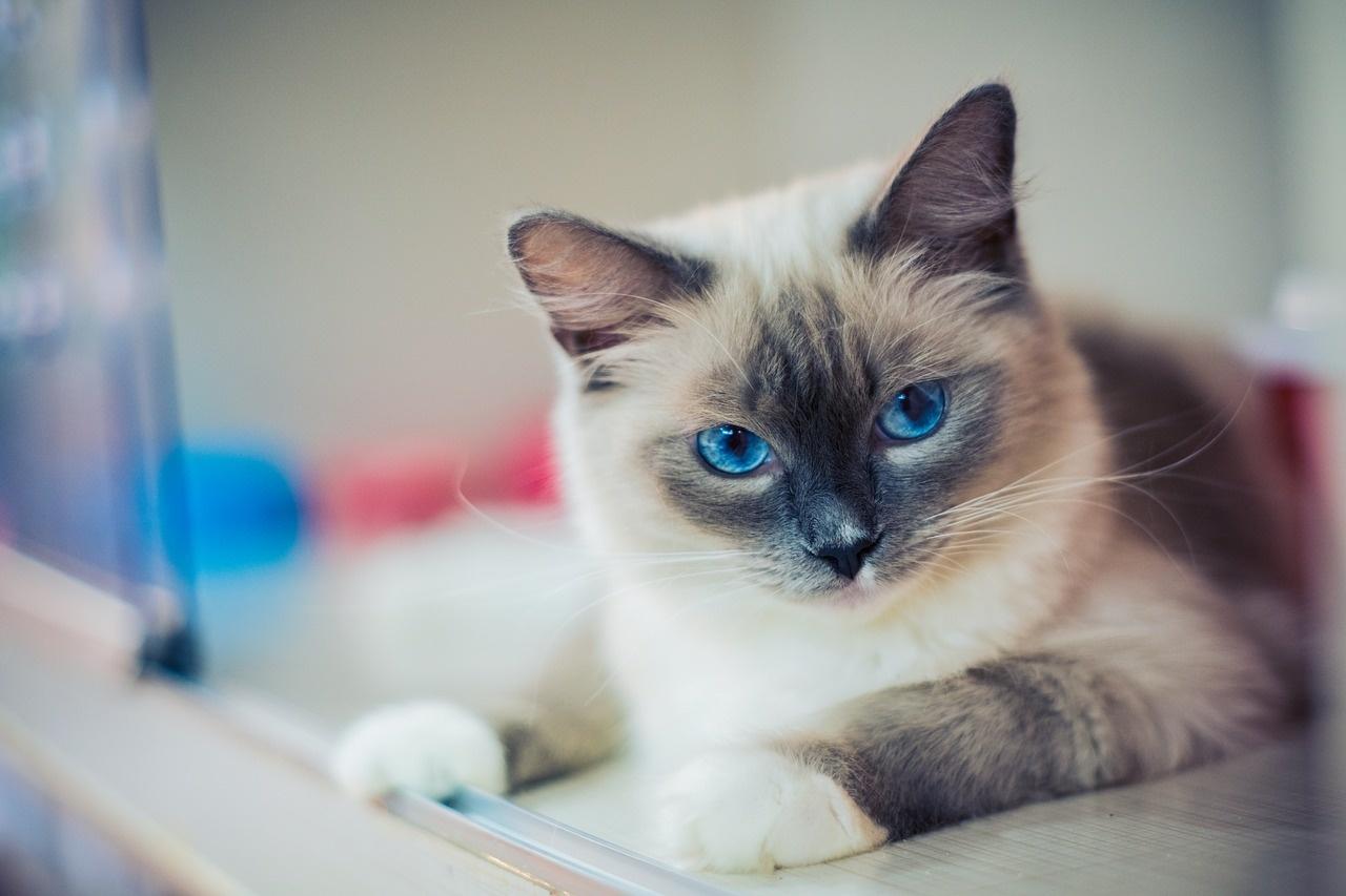 kitty-2602118_1280